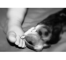 Toes and Paw Photographic Print