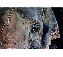 Mother Elephant Photographic Print