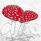 Fly Agaric by Robert Abraham
