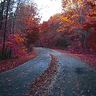 Autumn Road by MACLOVER