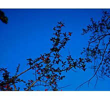 A LOVELY FALL DAY !!!!! Photographic Print
