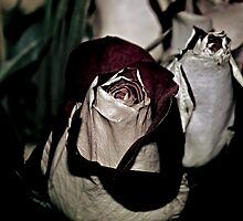My Rose by andapanda