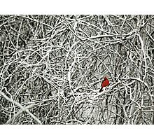 a touch of red Photographic Print