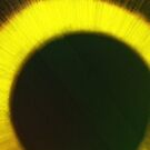 Eye Eye by John Dalkin