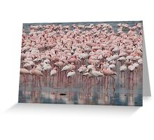 Flamingoes, Lake Nakuru Greeting Card