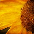 Sunflower by VLFatum