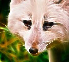 Snow Fox by Chris Summerville