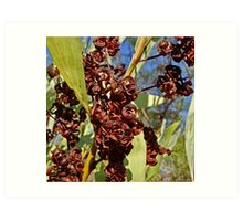 Fruits of the bush Art Print