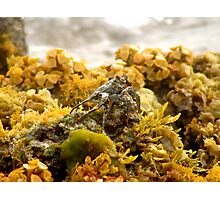 Land Crab - Bonaire Photographic Print