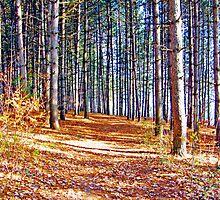 An Autumn Walk by marchello