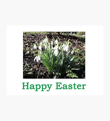 SnowDrops (Easter) Photographic Print