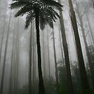 tree fern and mountain ash by Donovan wilson