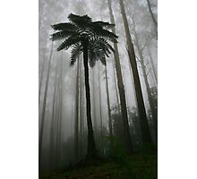 tree fern and mountain ash Photographic Print