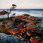 Binalong Bay Tasmania by Angelika  Vogel