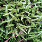Moss or Fungus by Vanessa k