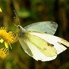 Butterfly in Sunlight by ienemien