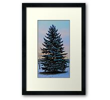 Frosted Spruce Framed Print
