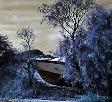 Beached in the trees in infrared by missmoneypenny