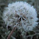 Frozen Fluff by Tracy Wazny