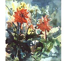 flower study Photographic Print