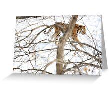 Winter Tiger Greeting Card