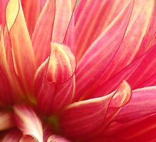 Precious Petals by Catherine Mardix