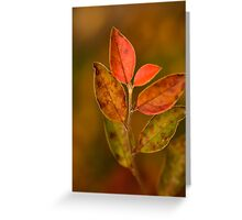Slowly Changing.  Greeting Card