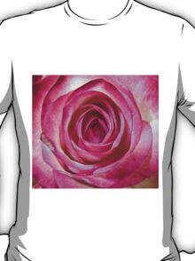 Pink rose close up T-Shirt