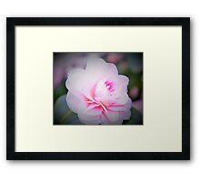 Soft Pink Camellia Framed Print