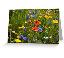 Wild Flowers At Lyme Gardens, Dorset. Uk Greeting Card