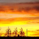 Fire In The Desert Sky by Susan Bergstrom