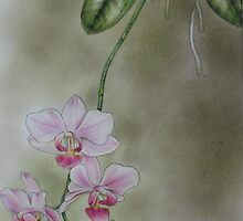 Phalaenopsis Orchid by Philip Holley