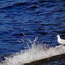 Gull by Kallian