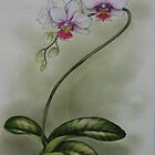 Phalaenopsis Orchid 2 by Philip Holley