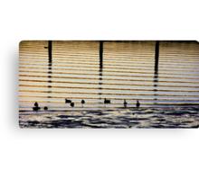 Sunrise Ducks Canvas Print