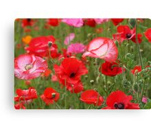 Poppy Patch Canvas Print