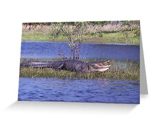 Gator on the bank Greeting Card
