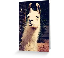What The Llama Greeting Card