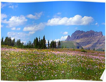 Glacier Wildflowers 8 by Tamara Valjean