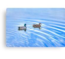 Male & Female Mallard in Water Canvas Print
