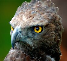 Watching You by Steve Humby