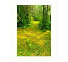 Sunny Summer Forest Glade Art Print