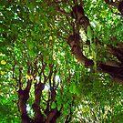 Trees by Kallian