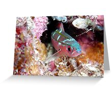 Fish on the Great Barrier Reef Greeting Card