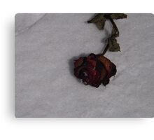 Snow Rose Canvas Print