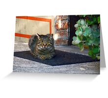 Cat at the door Greeting Card