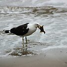 Gull With Flounder by Asoka