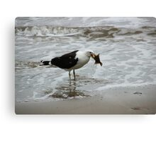 Gull With Flounder Canvas Print
