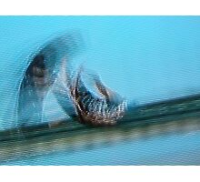 untitled blur Photographic Print