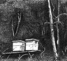 Beehives in the Bush by Melf